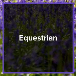 photography_equestrian