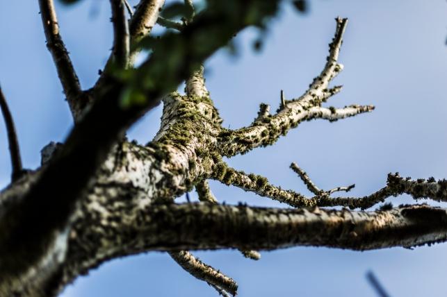 Tree Bark Glistening In Sunlight